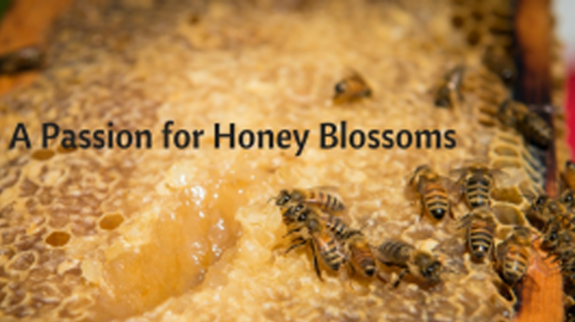 bees on honey