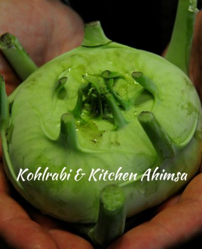 kohlrabi kitchen ahimsa