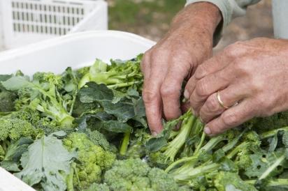 brocoli for sale at market