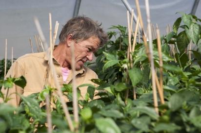 Kingsley Goddard inspects his plants.