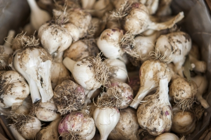garlic for sale at market