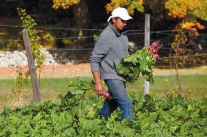 Head Gardener David Tacuri