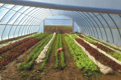 Waldingfield Farm Greenhouse