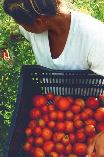 Back 40 Farm's tomato variety