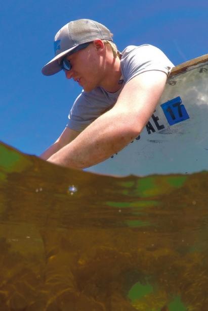 catching kelp
