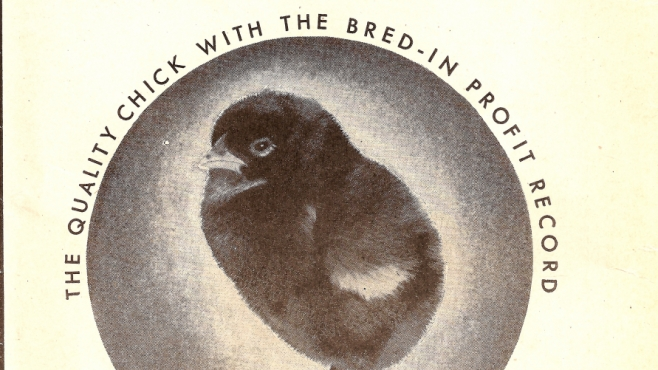 chicks for sale historical promotional poster