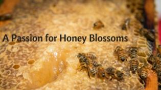 bees on honey